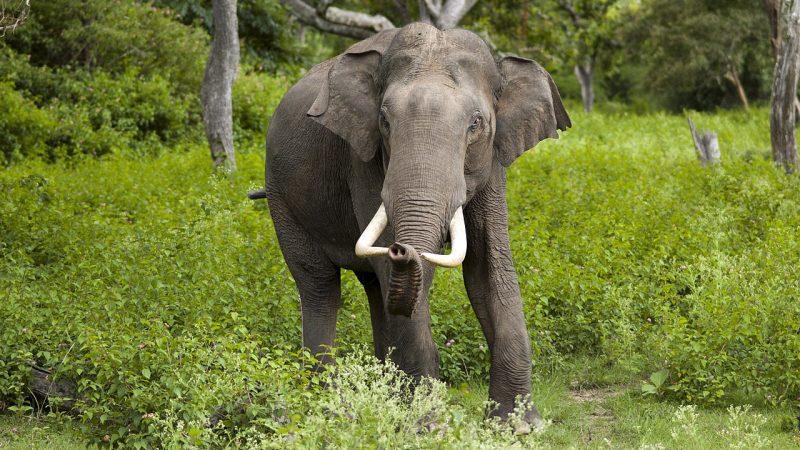 Besserer Schutz wandernder Arten