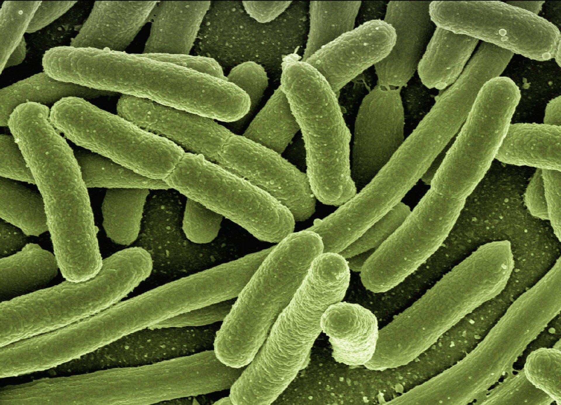 Landwirtschaft und Viehzucht brachten neue Krankheiten mit sich