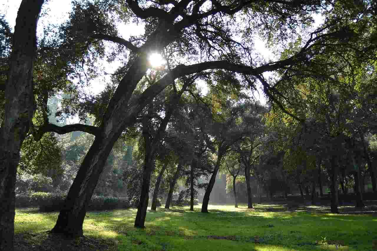 Naturschutz in Landeswäldern wirksamer umsetzen