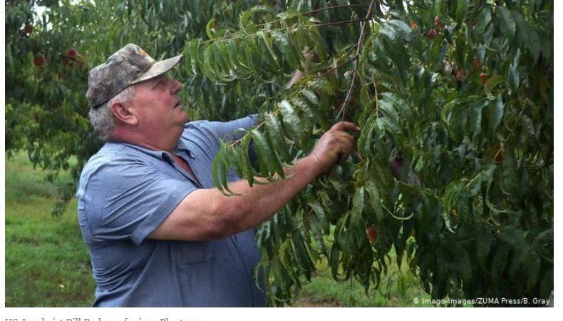 265 Millionen Dollar für einen Pfirsich-Bauern