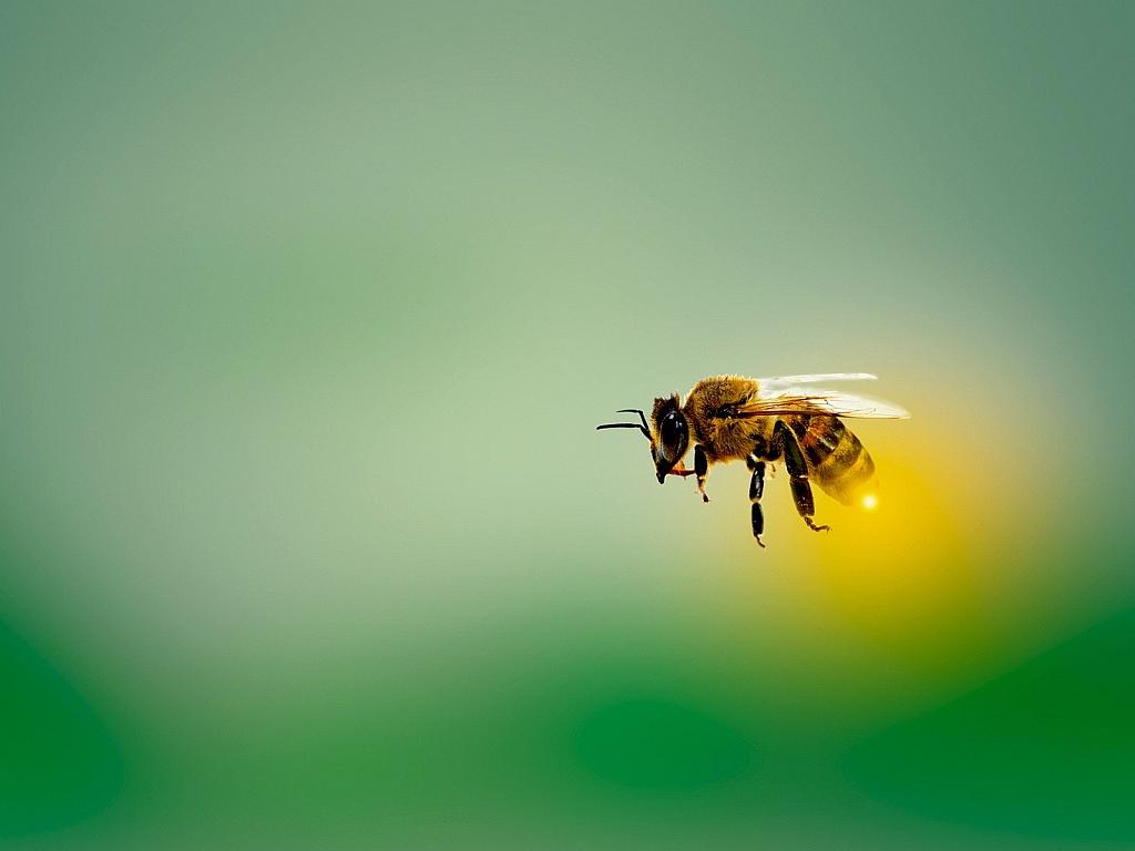 """EBI: """"Bienen und Bauern retten!"""""""
