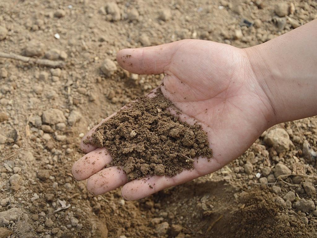 Virenschutz durch gesunden Boden!