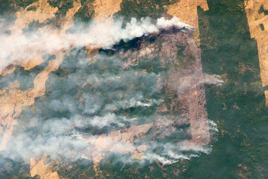 Rettung des Regenwalds nicht mit Selbstverpflichtungen