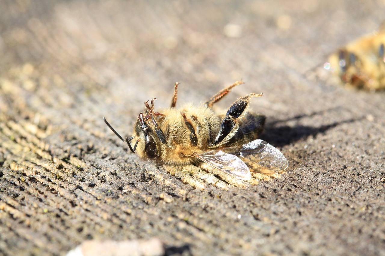 EU-Pestizidprüfer wollen Reform