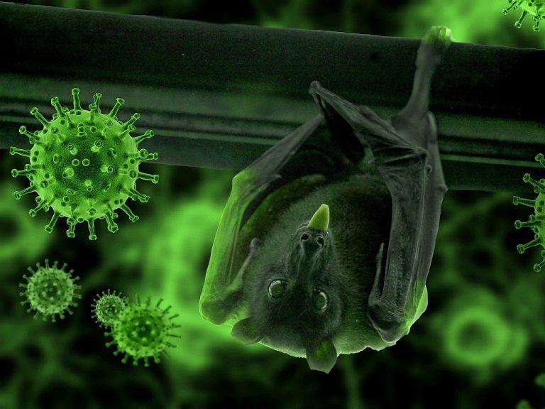 Natur- und Klimaschutz schützen auch vor Viren