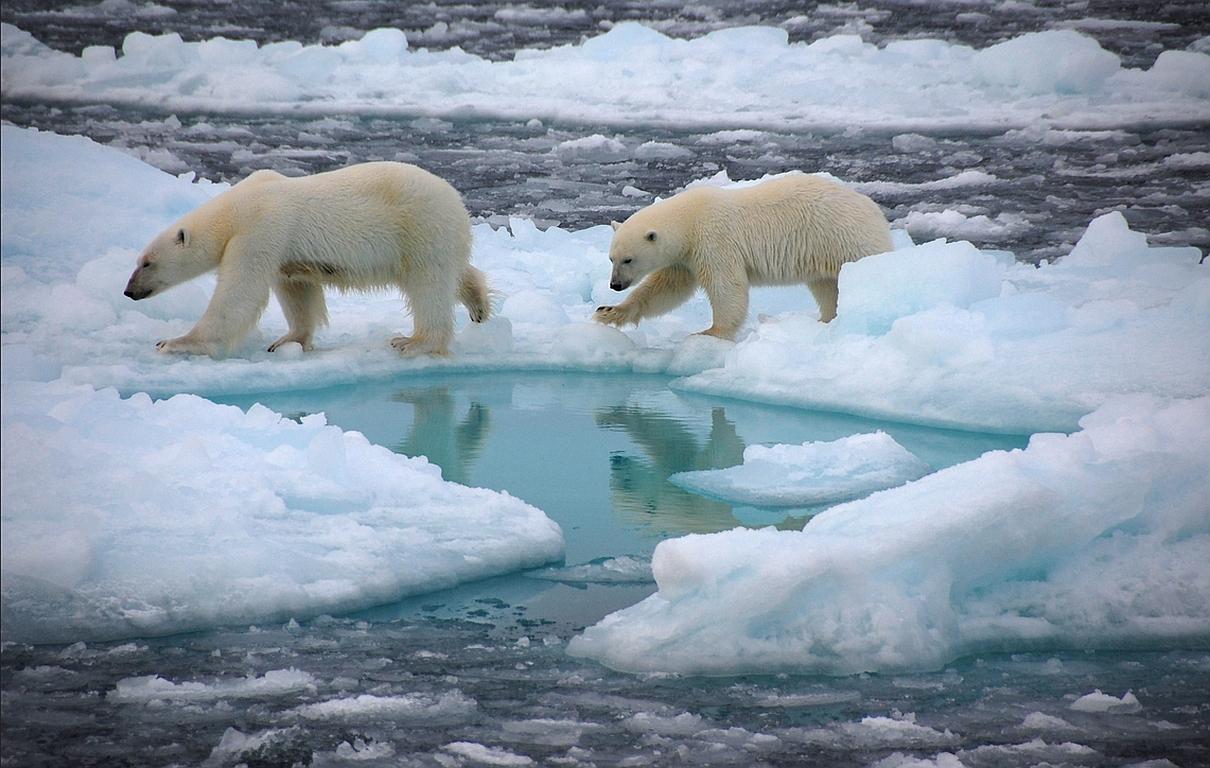 Bald eisfrei zum Nordpol