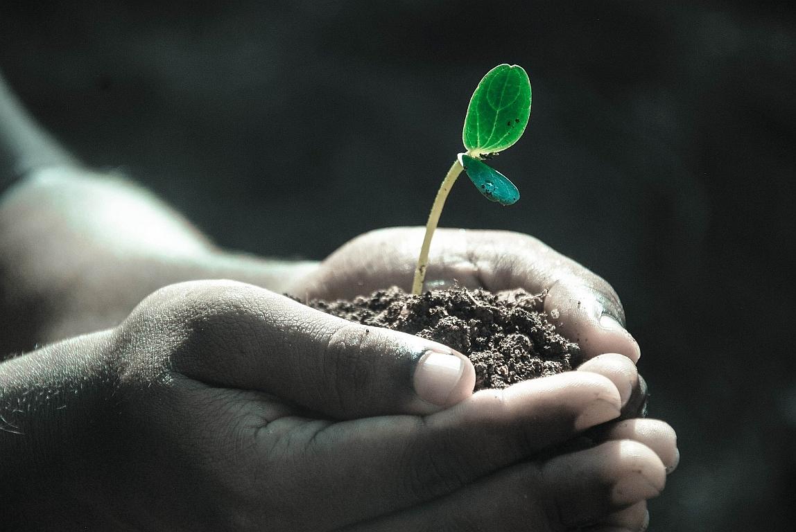 Interesse am Klimaschutz in Unternehmen wächst