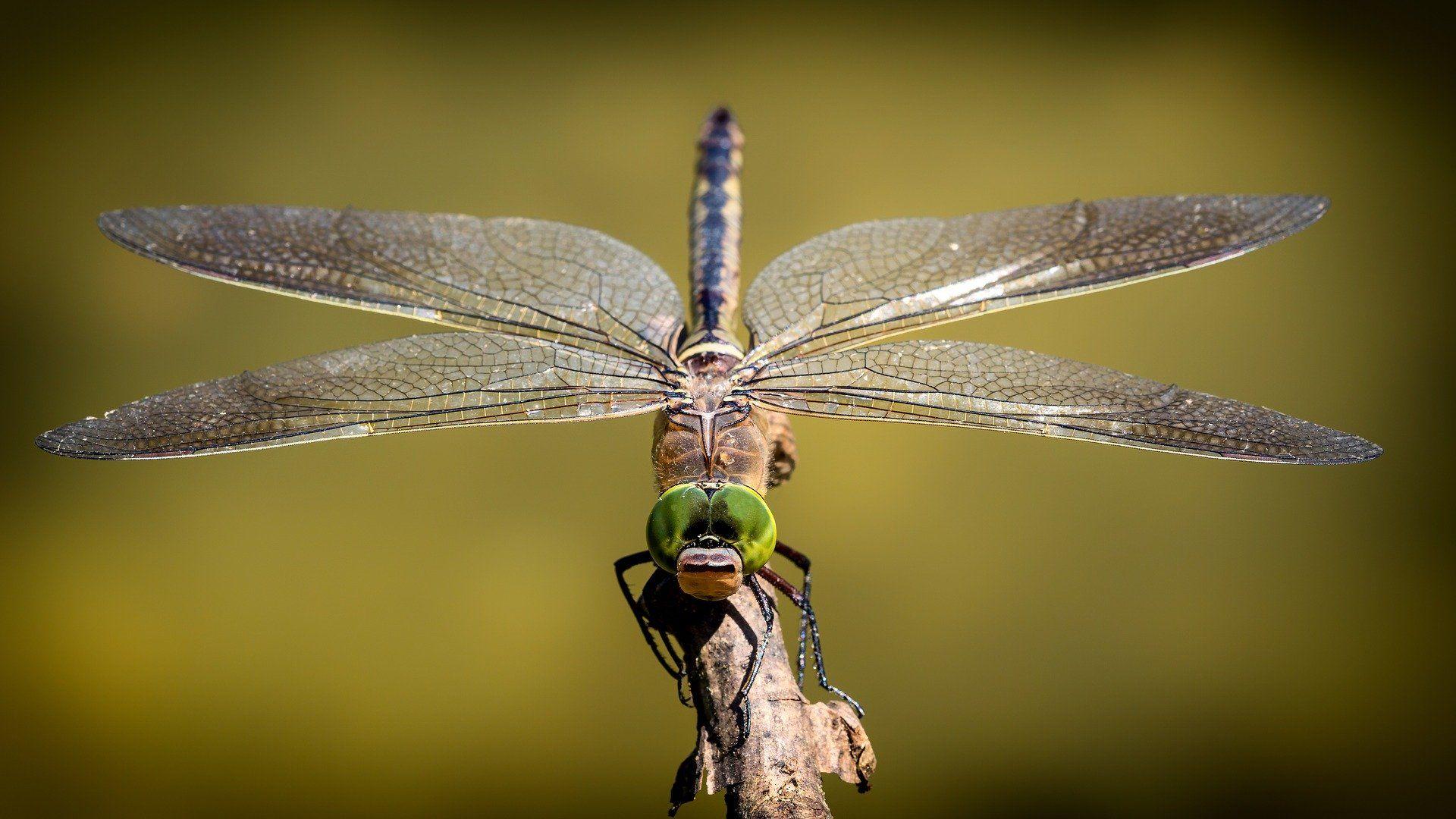 Weniger Ameisen, mehr Libellen