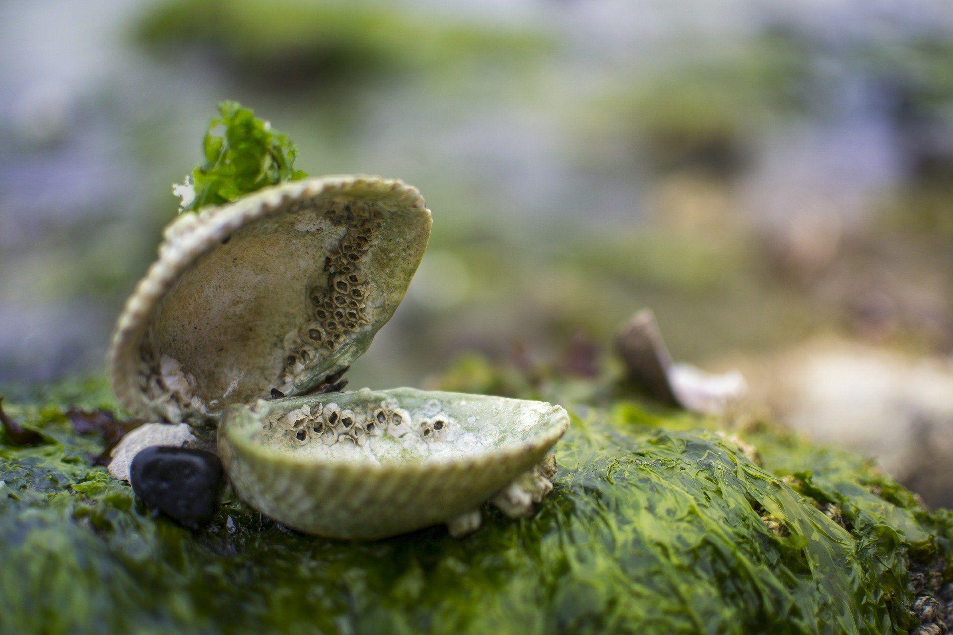 Die Zukunft der Landwirtschaft liegt im Meer