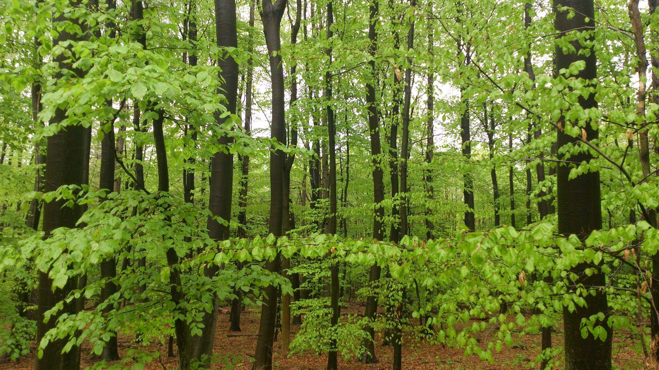 Können Bäume wirklich Klimaretter sein?