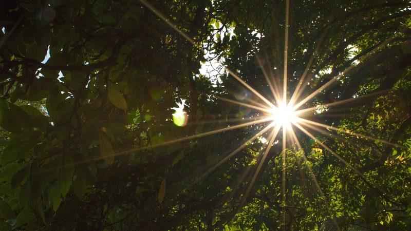 Klimawandel unterm grünen Blätterdach