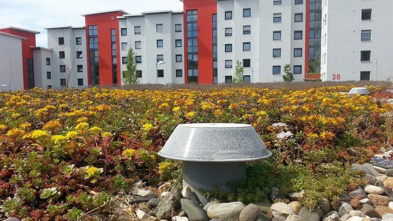 Grüne Dächer für mehr Insektenvielfalt