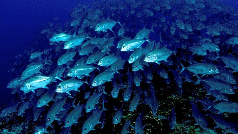 Deutschland will Meere besser schützen