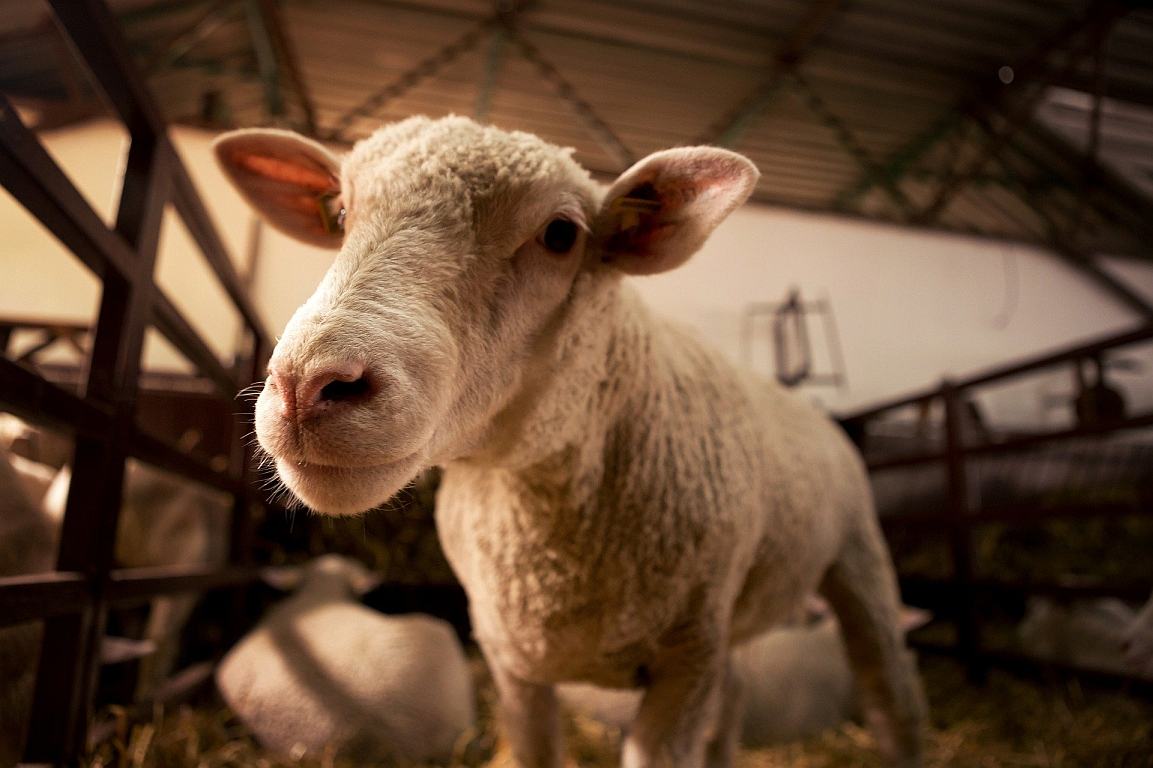 Gefahr: Erreger auch durch Tiere in der Landwirtschaft