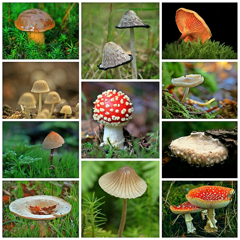 Mushrooms 1798755 1920 Anja Helpinghands Pixabay CC PublicDomaiin