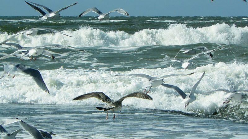 Schutz für Wale, Seevögel, Riffe und Sandbänke
