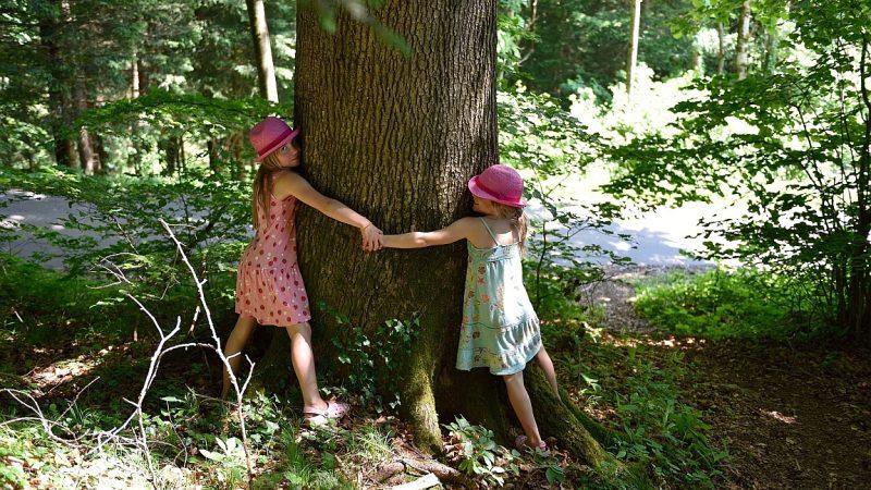 Bäume umarmen: Naturerkundung in der Stadt