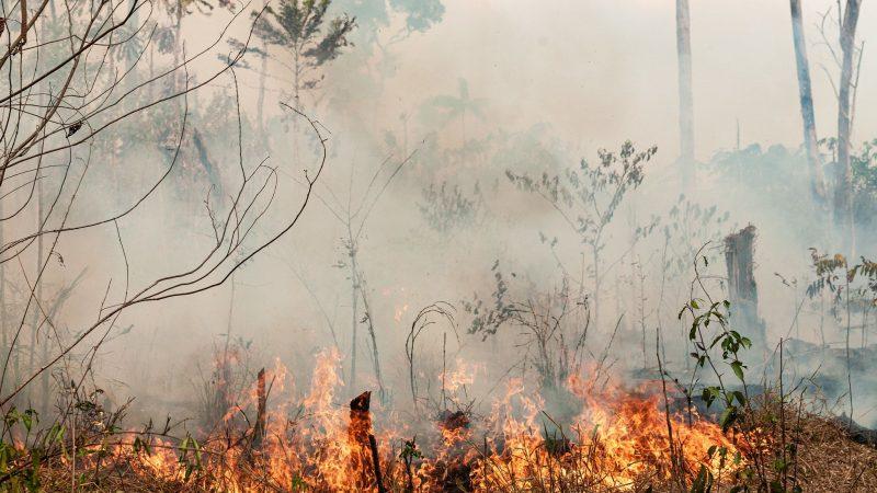Illegale Amazonas-Rodung erreicht Rekordwerte