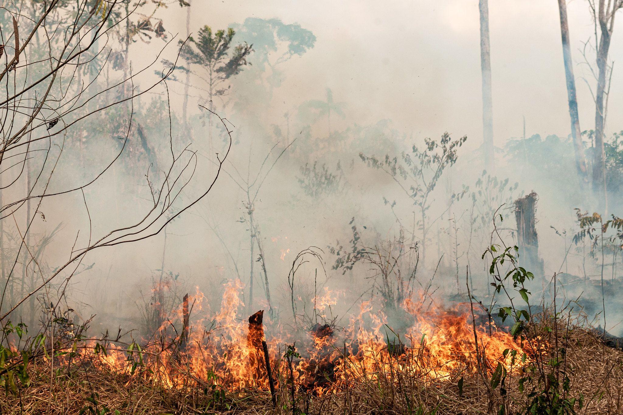 """Bolsonaro nennt Umweltschützer """"Krebs"""""""