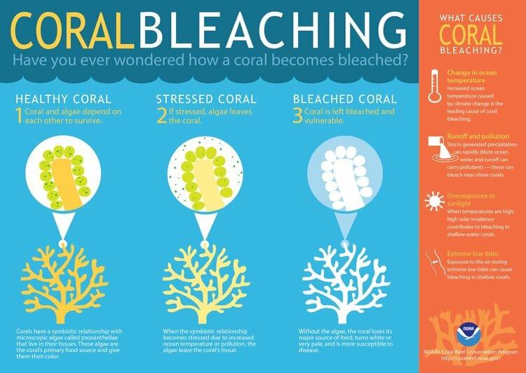 coral bleaching noaa