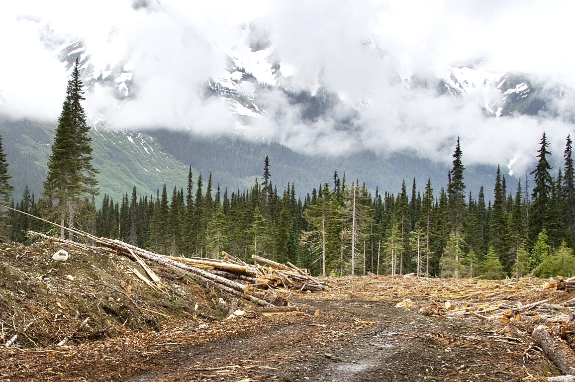 Waldverlust verstärkt Biodiversitätswandel