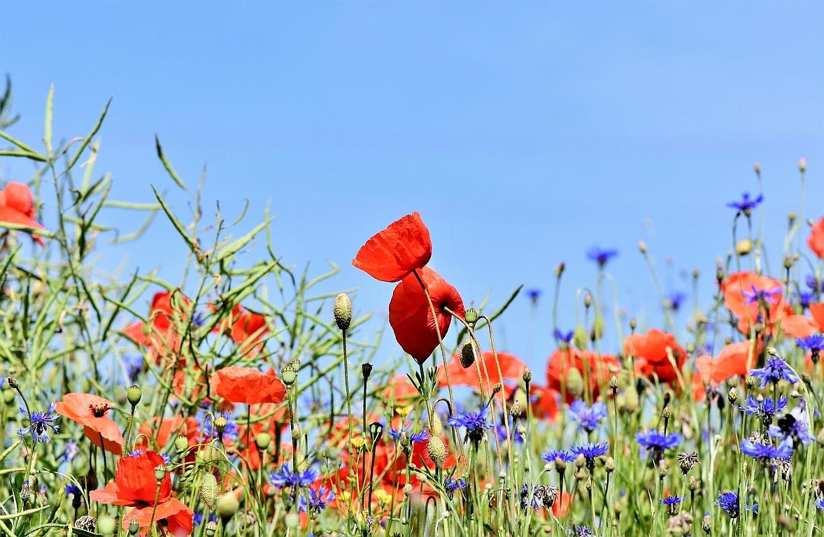 3 Millionen Euro für den Insektenschutz im Ackerbau