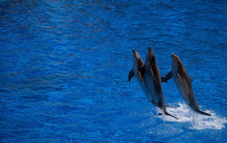 Bitte Abstand: auch bei Walen und Delfinen