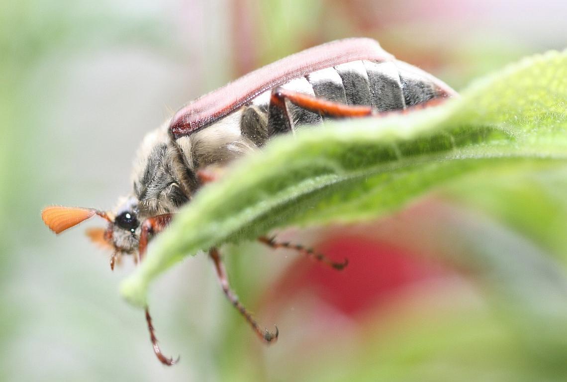 Mehr Fachkräfte für mehr Artenvielfalt