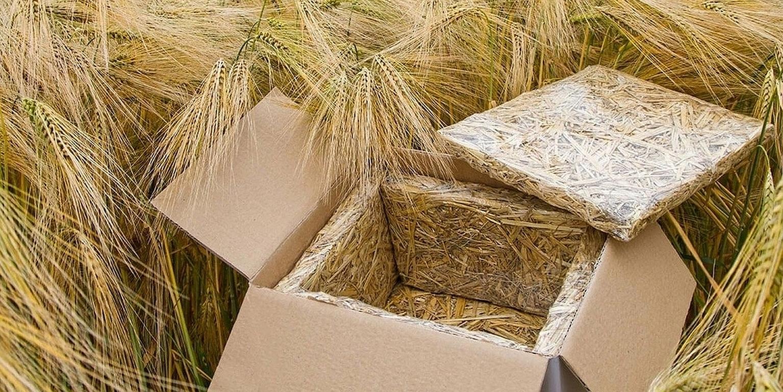Stroh statt Styropor für Isolieverpackung