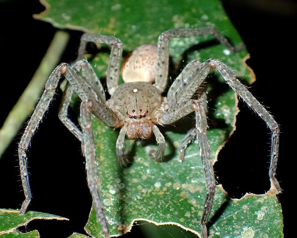 Eine Spinne namens Greta