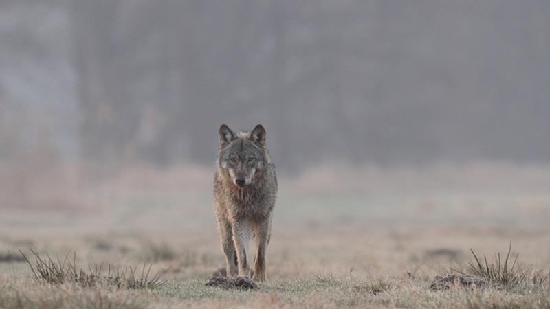 Artenschutz ist Schutz vor seuchen