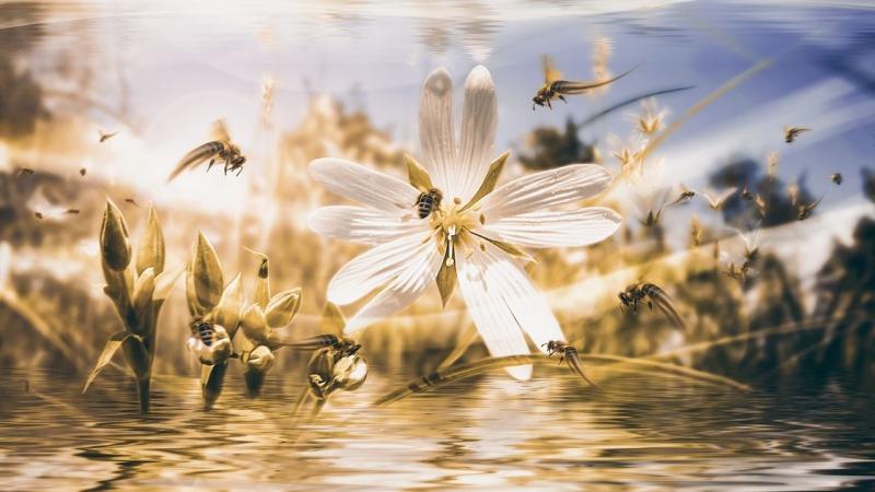 Weniger Ernte aufgrund von Insektensterben!