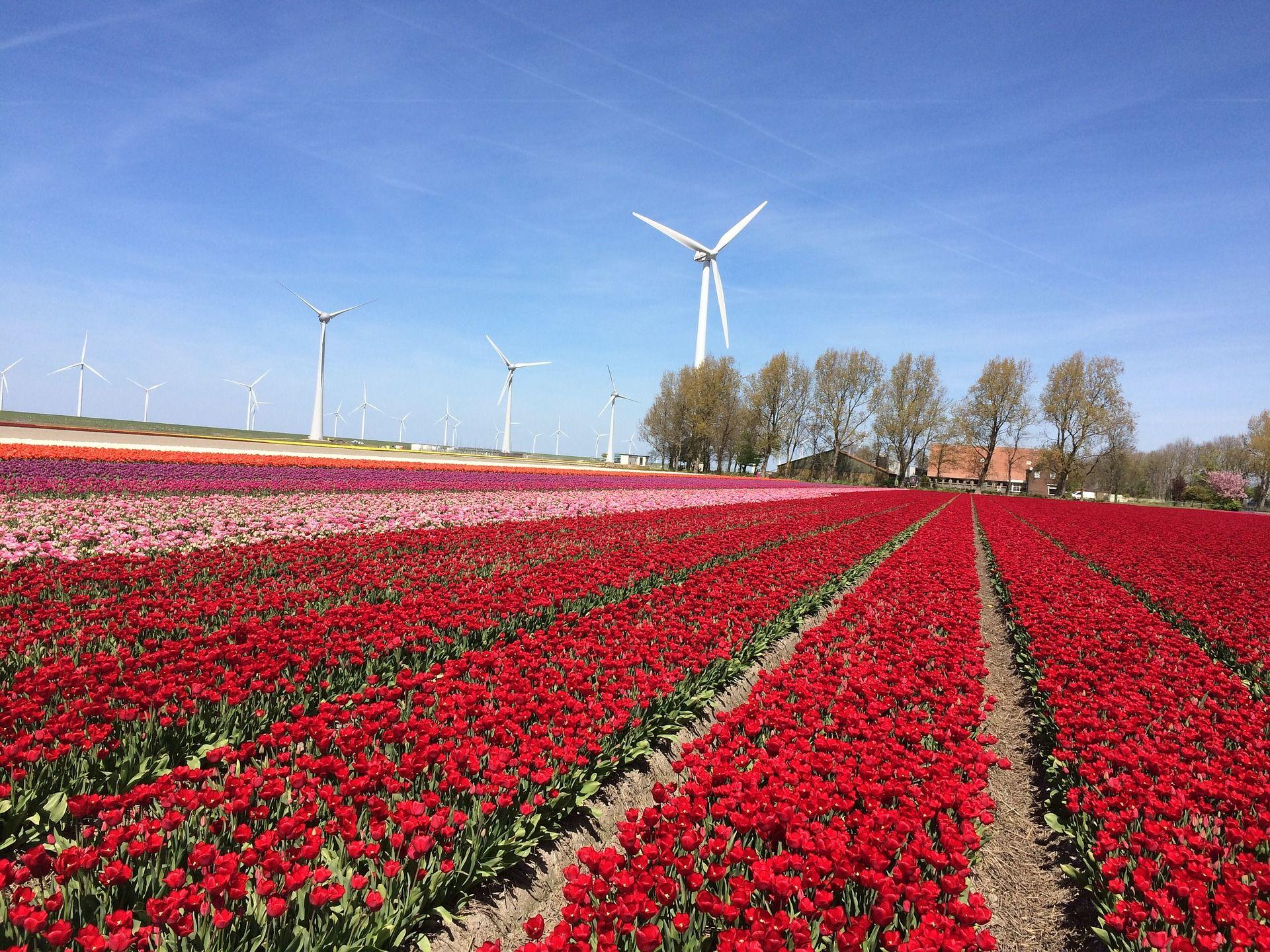 Niederlande kaufen grünen Strom nach