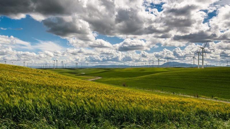 Windenergie oder Artenschutz