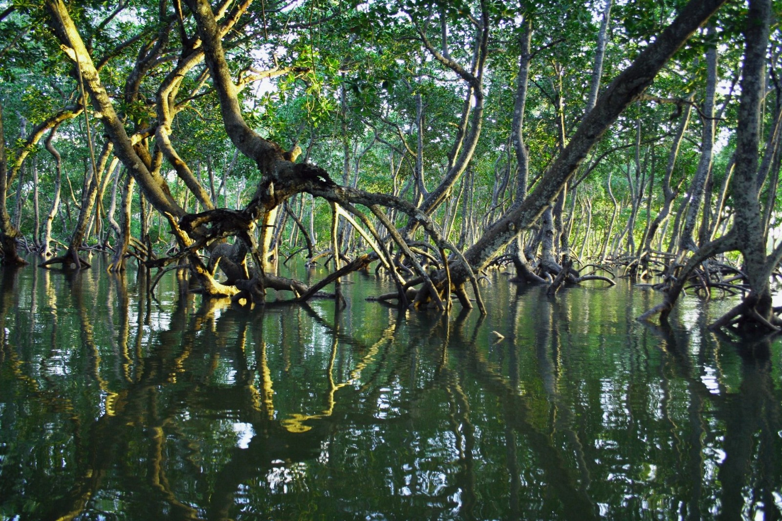 mangroven timothy k unsplash