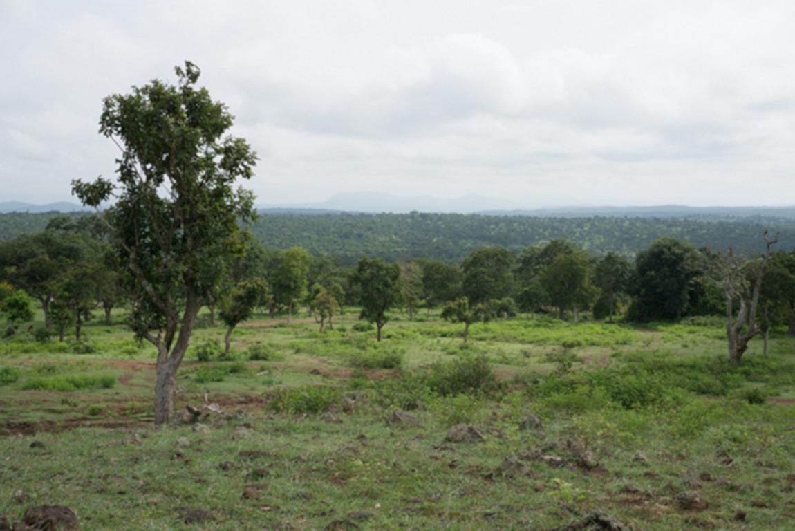 Klimawandel lässt Wald in Asiens Tropen ergrünen