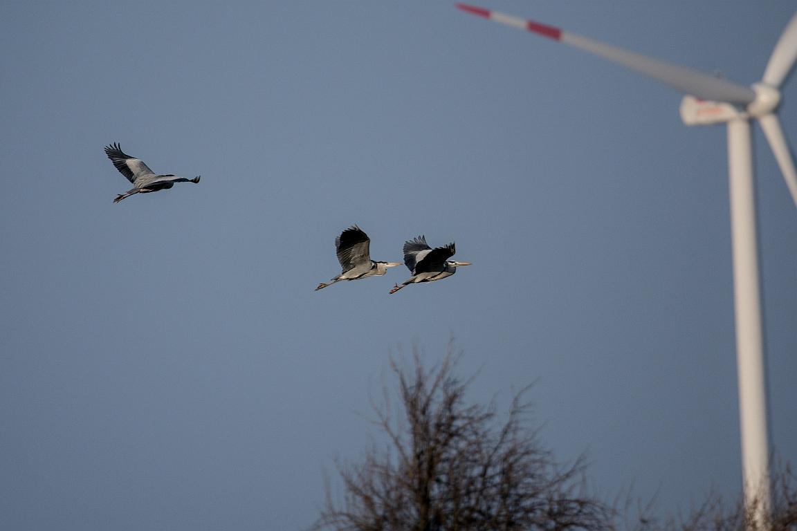Vogel-Kollissionen mit Windrädern mindern