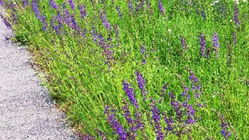 """""""FLIP"""" bringt artenreiche Wiesen in die Stadt"""