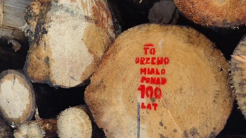 Holzernte in der EU könnte Klimaziele gefährden