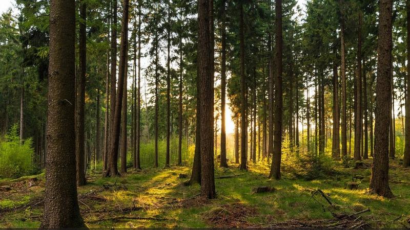 Klimaschutz: Warum Bäume pflanzen nicht reicht