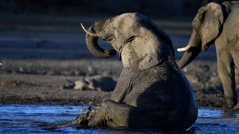 Rätsel um Tod der Elefanten