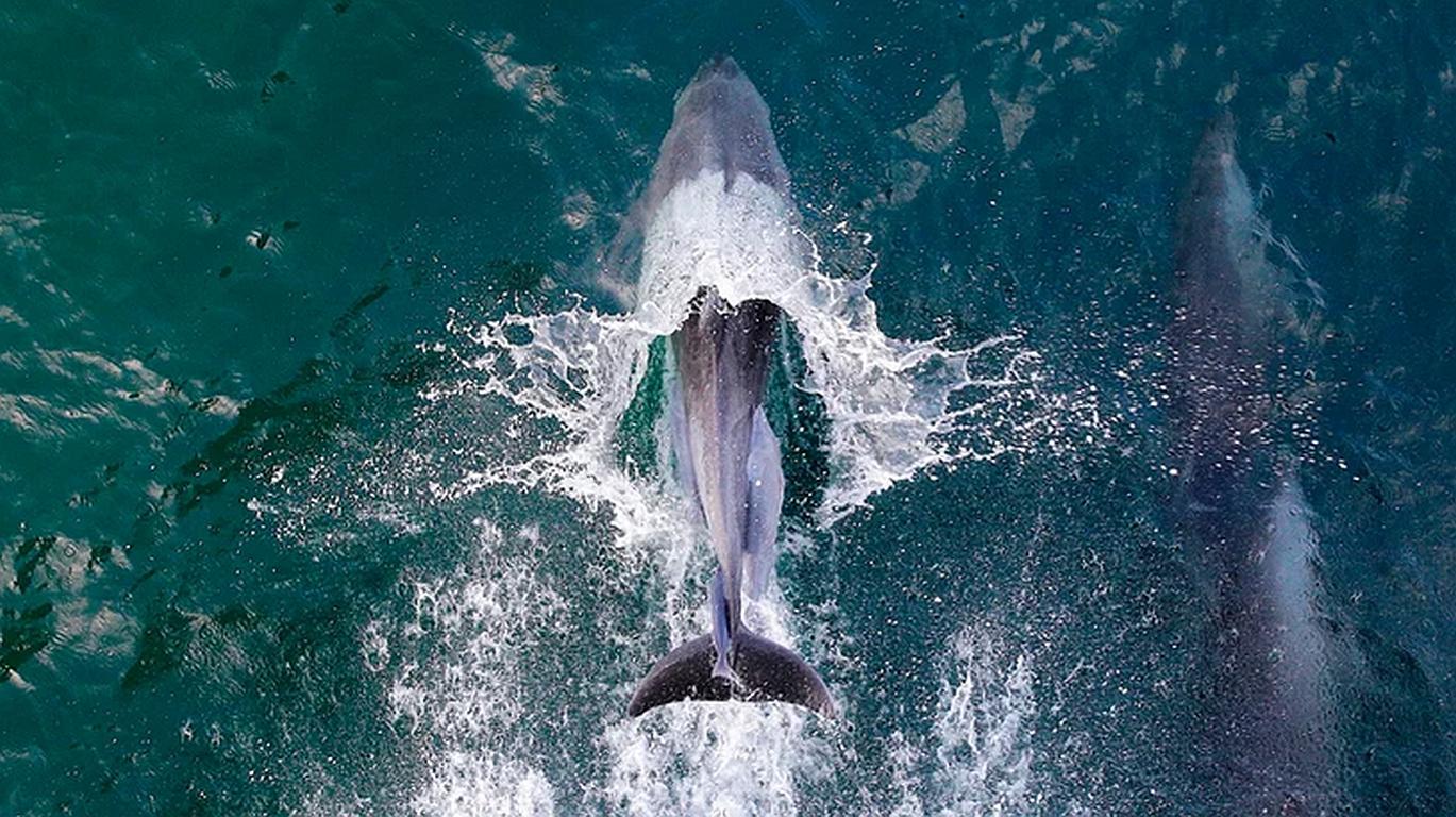Klimawandel bedroht bis zu 60 Prozent aller Fische