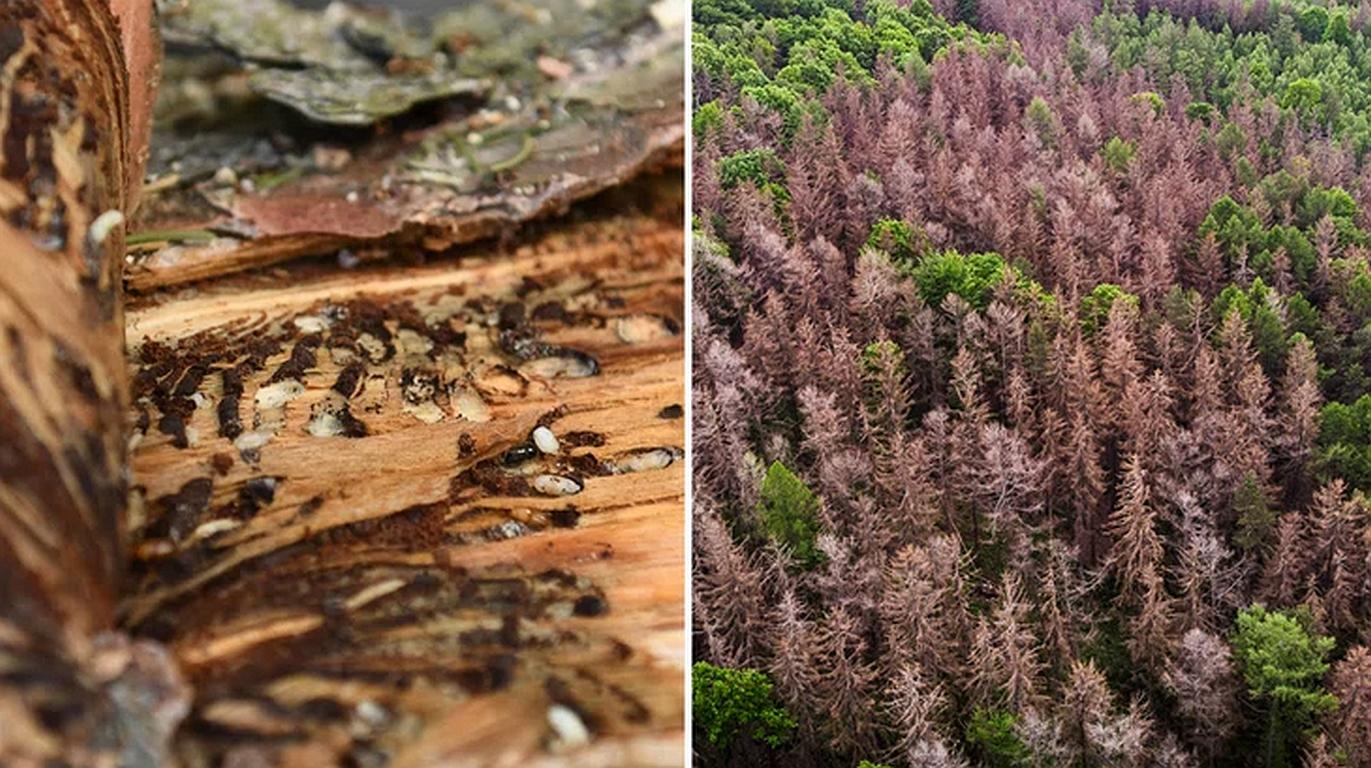 Patient Wald verliert Holz
