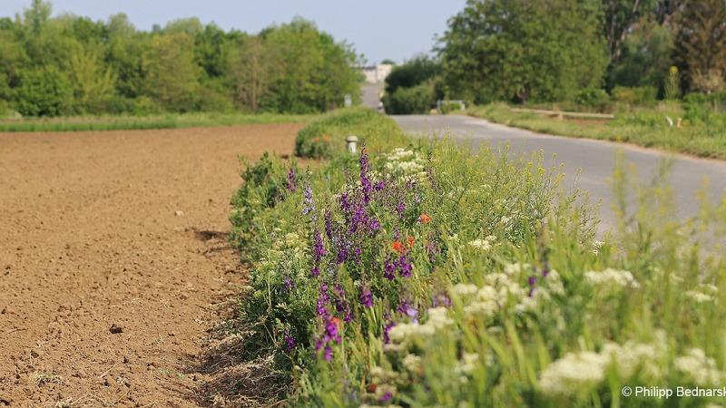 Artenvielfalt auf kleinen Flächen schützen