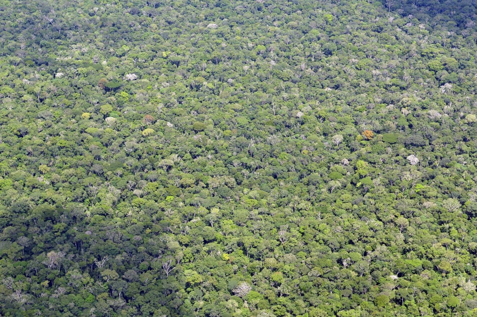 amazonas regenwald13 CIAT flickrCCBYSA20