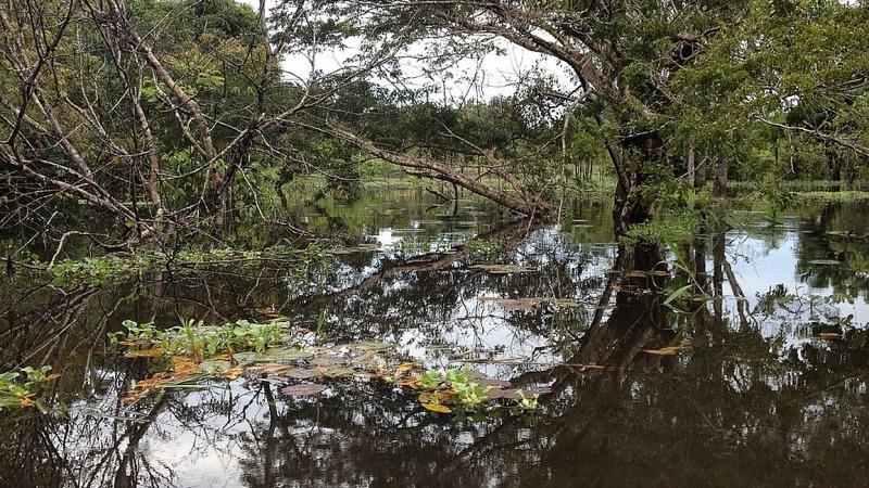 Fridays for Future kämpft für den Regenwald