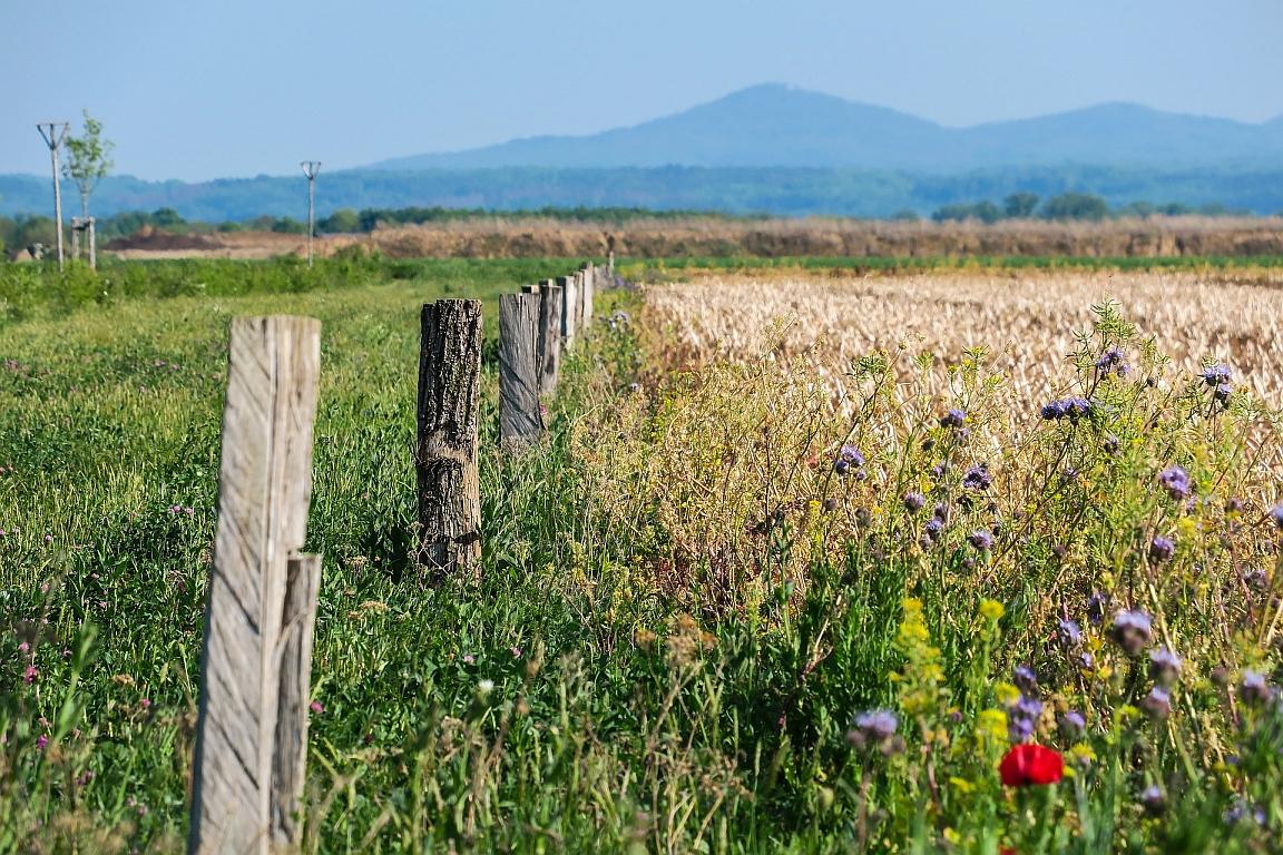 EU-Agrarpolitik 2020+ soll Artenschutz stärken