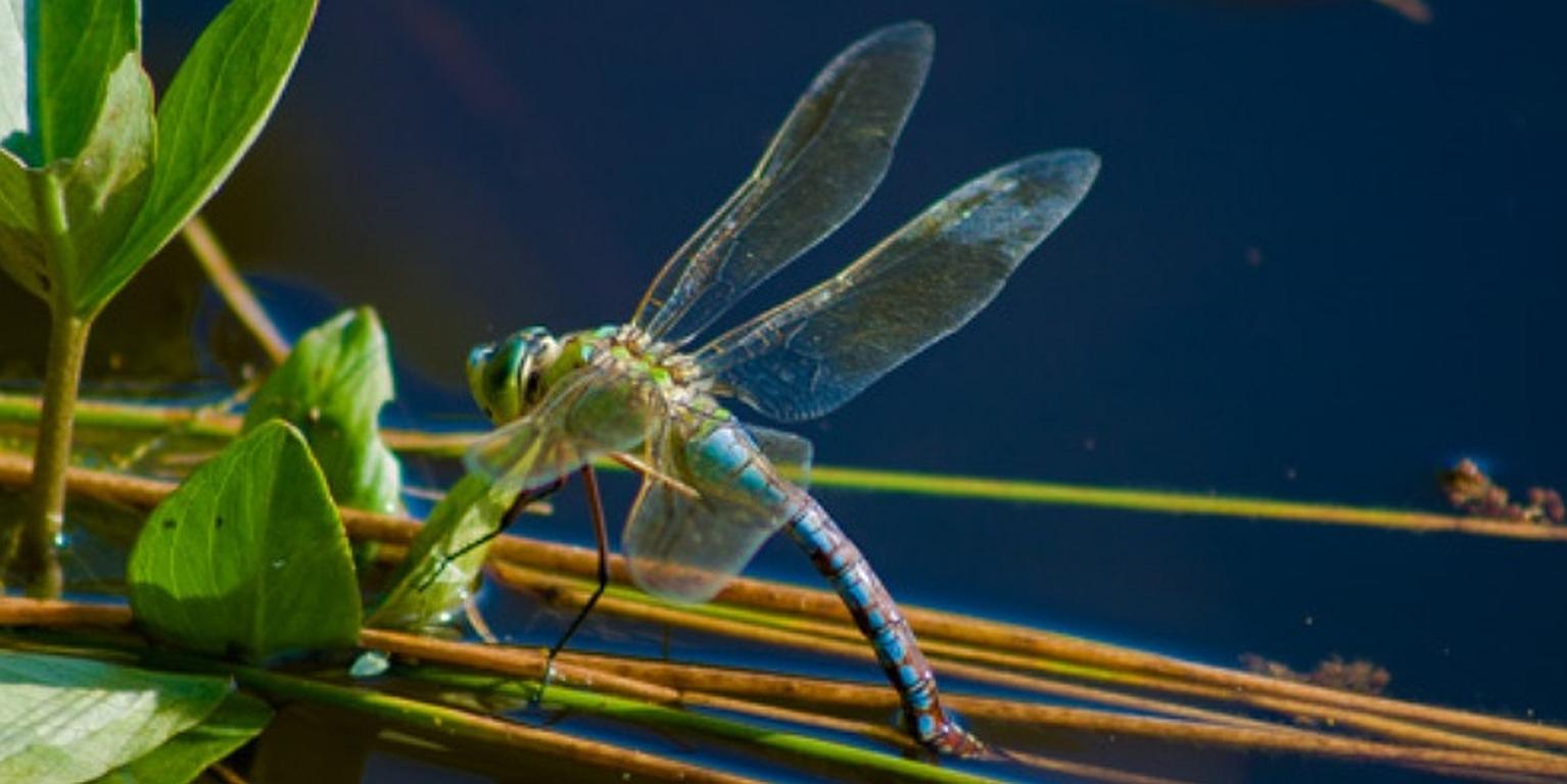 Mit mehr Artenkenntnis zu mehr Artenvielfalt
