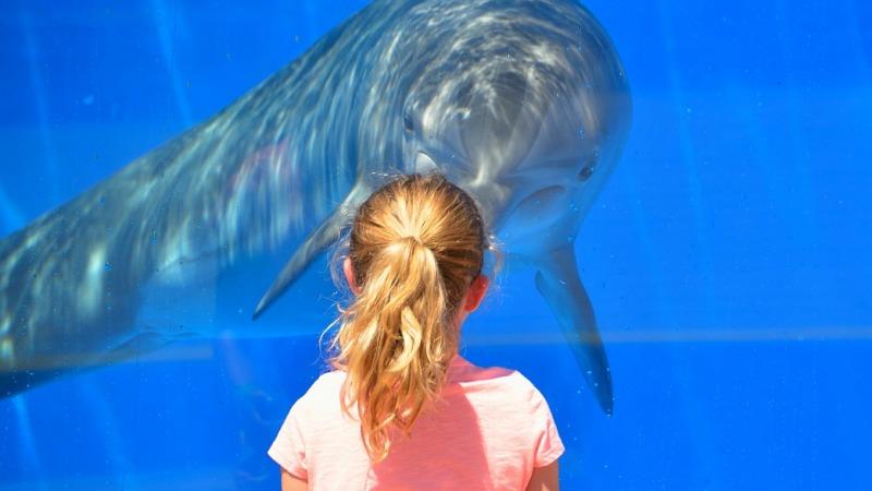 Zahl gejagter Delfine seit Jahren rückläufig