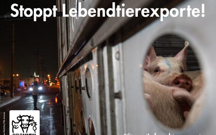 Bundesländer verbieten Lebendtierexporte!